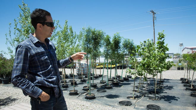 Jesus Palma, owner and manager of Green Fox Landscape Supply, describes the technique in which Green Fox drops planters into the ground so the trees can be automatically watered with drip irrigation and stay up right even on windy days in Las Cruces. May 1, 2017.