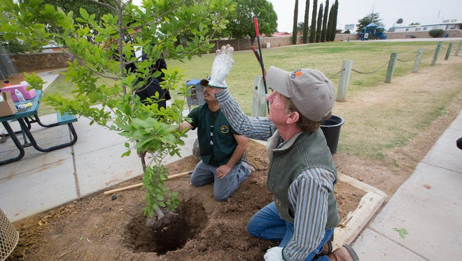 Jimmy Zabriskie,  right, the community forester for the city of Las Cruces, directs Roman Ortega, center, to  move  the newly planted Chinqiapin Oak tree over a bit in the hole, before finishing the planting at Ponderosa Park, Friday April 27, 2018. The tree planting is a way to celebrate Arbor day.