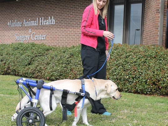 medical care for your pet is breaking new ground