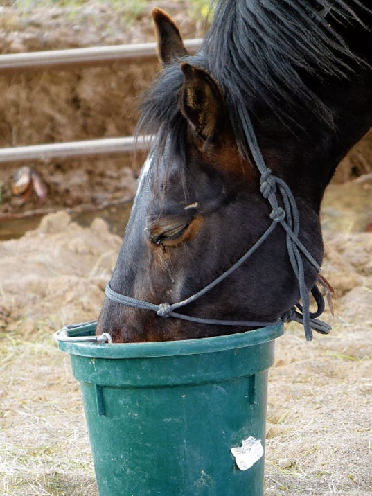 A bucket of water tastes so good after an hour of training.