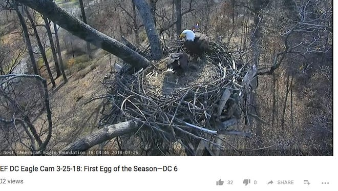 A bald eagle duo named Mr. President and First Lady welcomed their first egg of 2018, according to footage from the D.C. eagle cam.