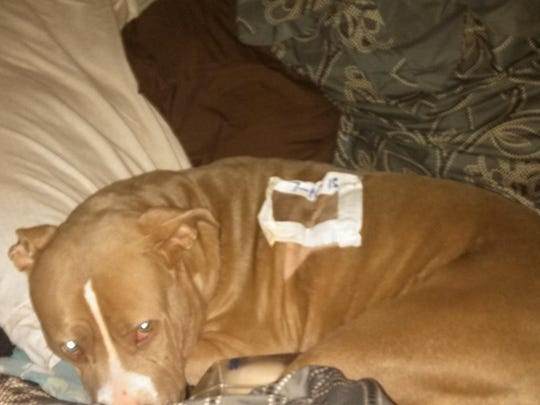 Daisy's injuries included a fractured leg, broken teeth, a hole leading up to her nasal cavity and a tear causing air to be forced under her skin.