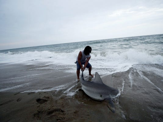 """Taylor Thornton pulls a 6-foot dusky shark back into the ocean in South Bethany, Del. Thornton says he found the bigger sharks can't reach that far back to bite. <a href=""""https://www.ydr.com/local/ci_28426878"""">An enforcement officer from the Department of Natural Resources</a>, though, says removing sharks from the water for even a minute or two can damage their organs and threaten their survival."""