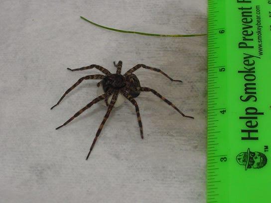 Photo 2 -- giant spiders