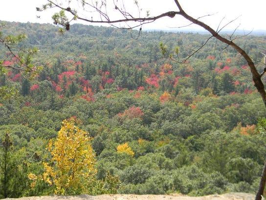leaves top of wildcat.JPG