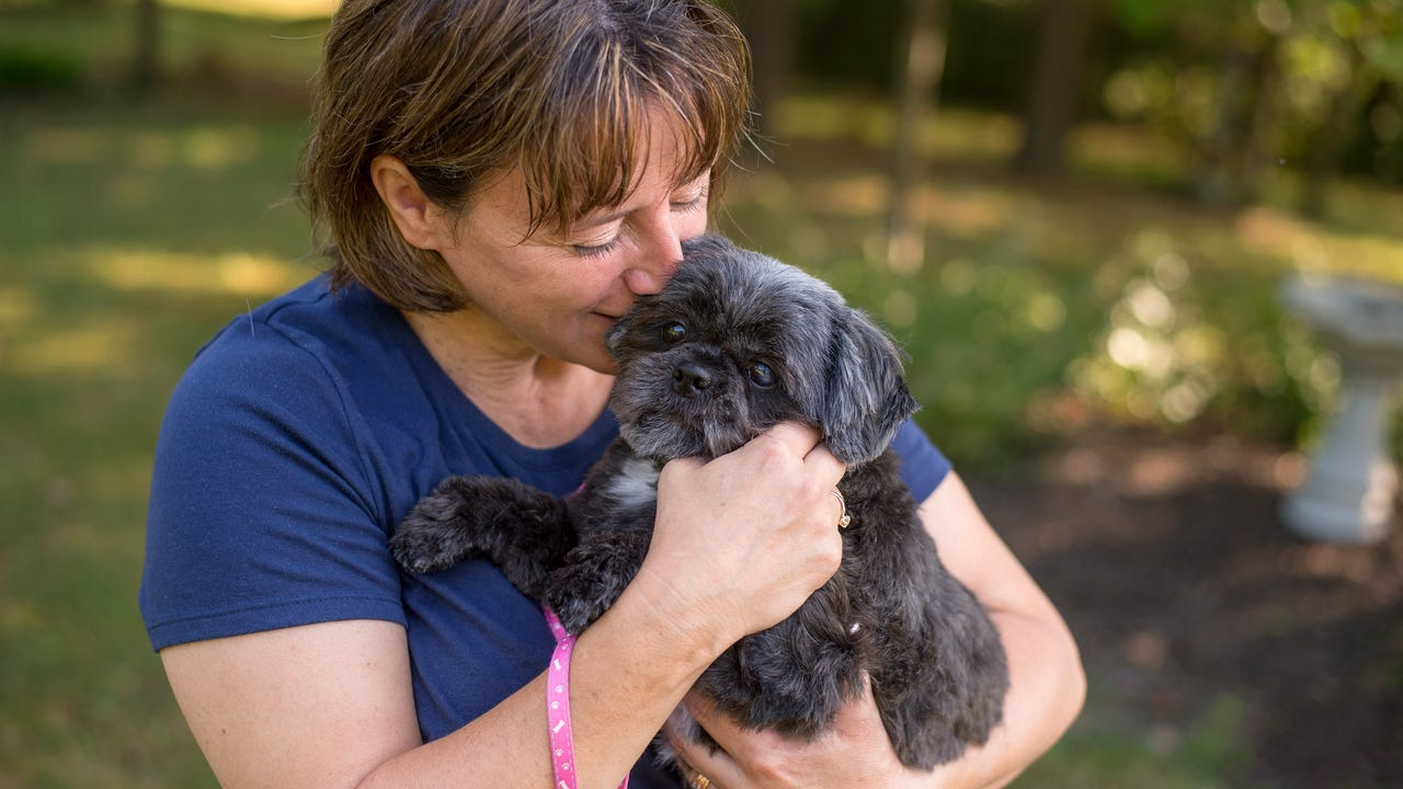 Maddie, a 4-year-old shih tzu who was rescued from the decrepit basement of an Endwell home last year, has found a home with Binghamton resident Vicki Griffin.