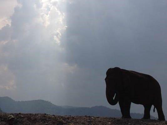 636104906111028801-Elephants02.jpg