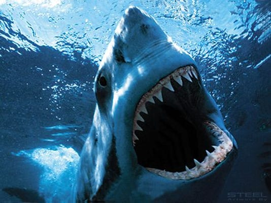 81214jaws