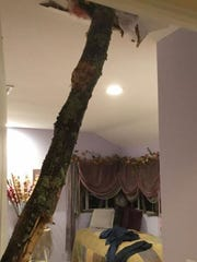 The tree that crashed through the roof and into the upstairs of a home in Van Houten Fields in West Nyack.
