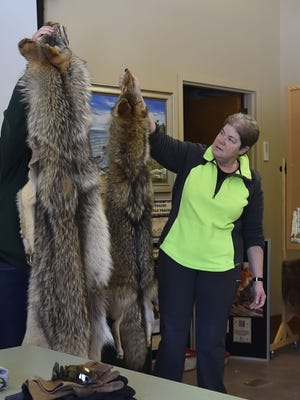 Newport State Park manager Michelle Hefty, right, holds up a coyote pelt while naturalist Beth Bartoli, hidden, holds a wolf pelt to show the similarities and differences between the two animals.