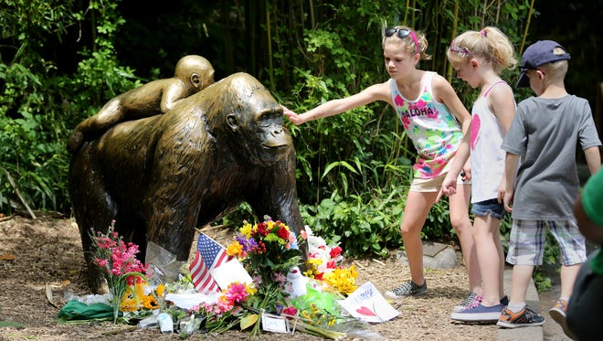 A statue of a gorilla and baby at the entrance to Gorilla World at the Cincinnati Zoo and Botanical Garden has became a memorial May 31, 2016, for Harambe, 17-year-old silverback western lowland gorilla, shot and killed three days earlier after a 3-year-old fell into his enclosure. Allison Tillack, 9 of Amelia, Ohio, reaches out to touch the statue.