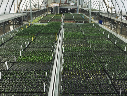 A look at greenhouse full of various plants and flowers