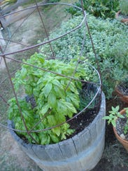 An herb garden adds fragrance to your home.