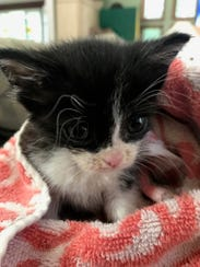 Clover from Eleventh Hour Rescue is a 2-month-old sweet