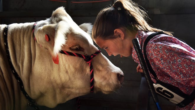 """Avery Howard, 11, of Greenwood, gives a """"pep talk"""" to a European Cross cow named Tracker before competing in the 52nd annual Dixie National Livestock Show in Jackson."""