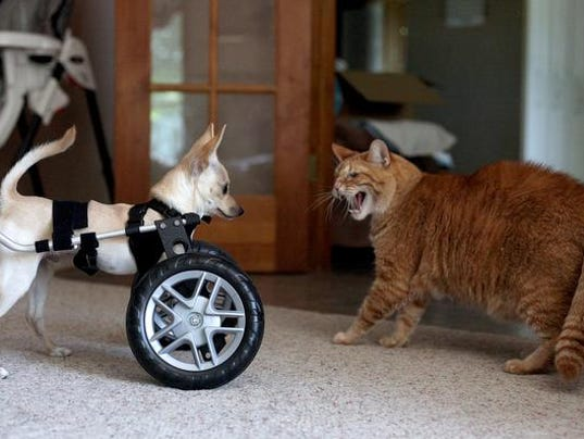 Born to Roll – When a Wheelchair Means Freedom images