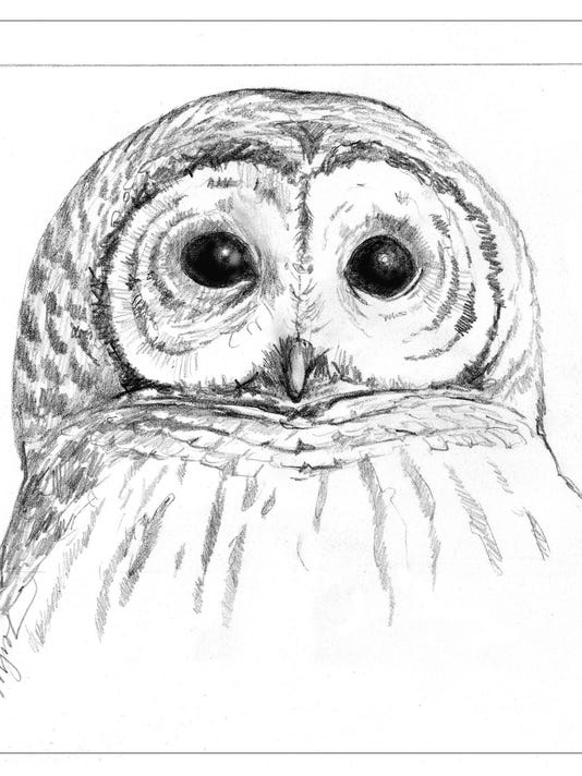 TOS_Barred_Owl_Face