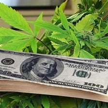 Marijuana and money