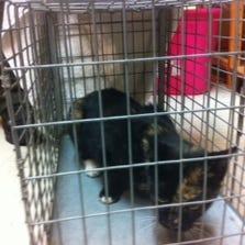Cat captured at Richard Henry Lee Elementary School
