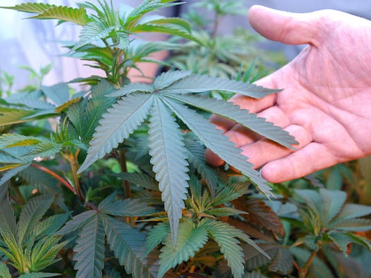 legal marijuana is wrong