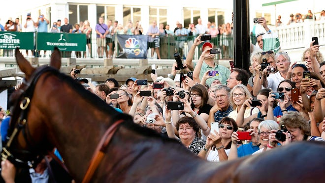 Triple Crown winner American Pharoah paraded around in front of a 28,968  crowd at Churchill Downs on June 13, 2015.