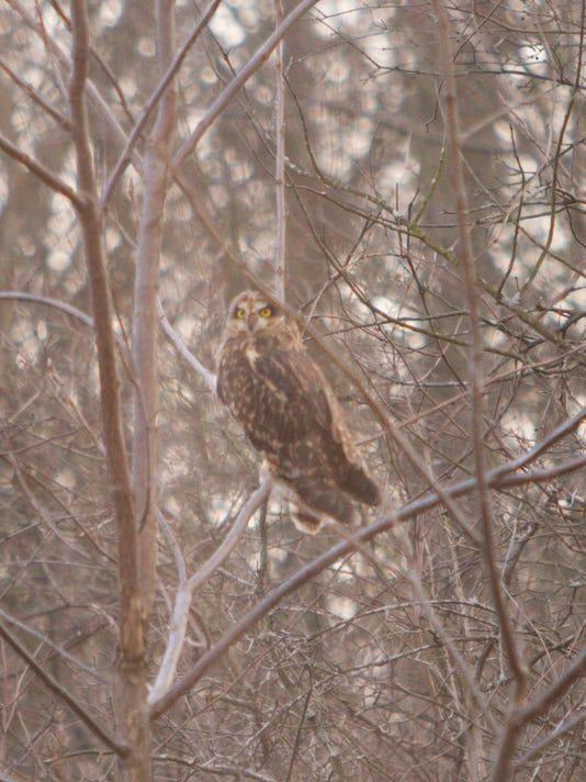 Owl release_02.jpg