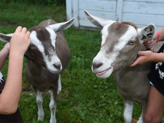 Goats Nibbles, left, and Milly, right, at Clintonbrook