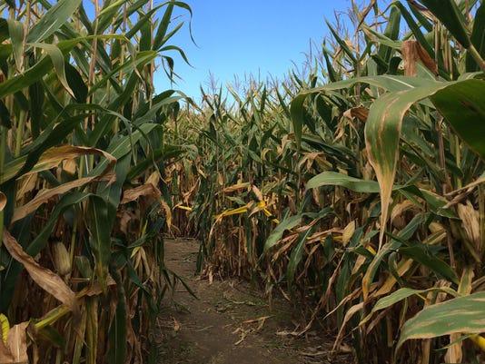 Corn Maze-O