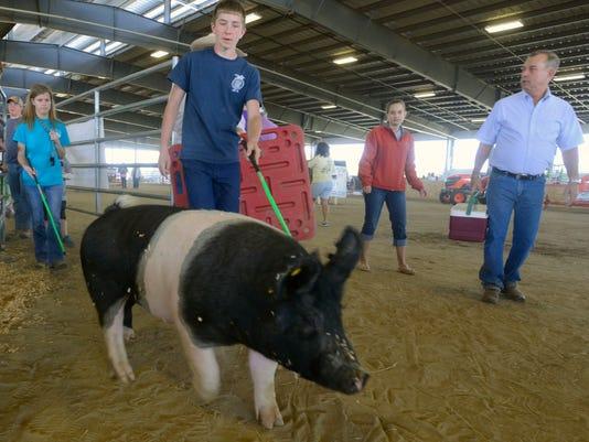 Hogs Livestock Show 3