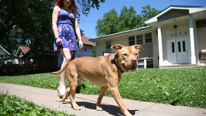 Abby Jacques, 20, of Des Moines, walks 3-year-old Simba near her home in the Drake neighborhood. A district court judge has ruled the animal be returned to Jacques after being seize by the city in February.