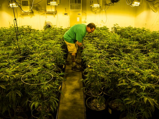 Medical marijuana growth