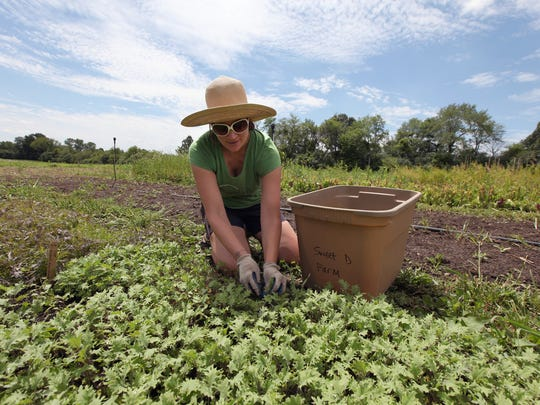 Dynelle Mackey, 37, of Dearborn, tends to her baby kale lettuce that is growing  on 1/4 acre plot she has been farming at Tilian Farm in Ann Arbor.