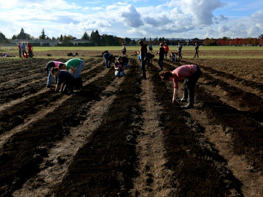 Students prepare vegetable gardens at Chemeketa Community College in Salem on Wednesday, Oct. 28, 2015. Chemeketa and Marion-Polk Food Share are working together to build and manage six acres of vegetable gardens, orchards and greenhouses for the benefit of students and patrons of the Food Share.