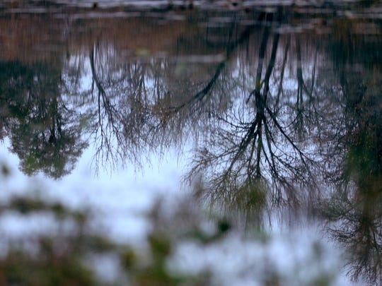 Trees reflect on Goose Lake at Willamette Mission State Park.