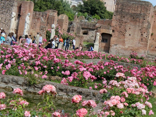 Springtime at the Roman Forum in central Rome, Italy, where roses offset the harsh ancient ruins.