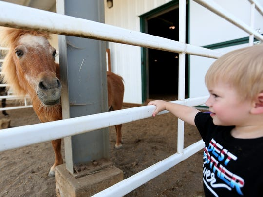 Edwards Babcock III, 1, of Albany, looks at Jasmo, a miniature therapy horse, at the Horses of Hope Oregon open house in Turner on Wednesday, July 15, 2015.