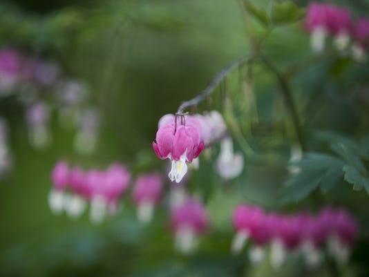 636003008509270368-SAL-RhododendronHillside-MJS-004-1-.JPG