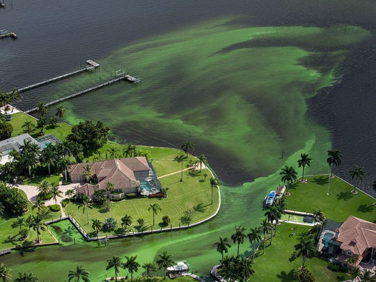 An aerial photo shows blue-green algae enveloping an area along the St. Lucie River in Stuart on June 29.
