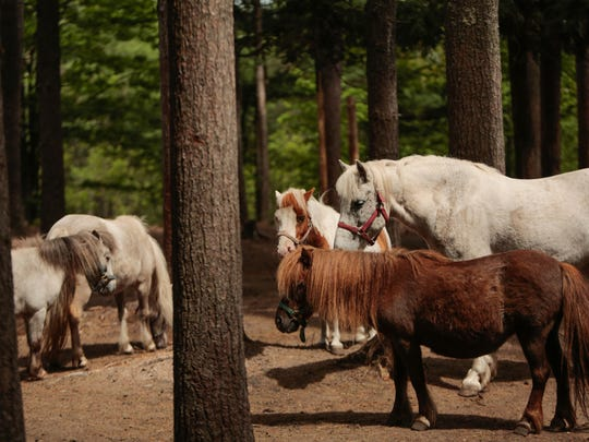 """Horses bask in the sunlight along with other rescued animals living at Pete's Petting Zoo in Baraga, Mich. """"People don't want anything that's not perfect. I don't care if they're not perfect. To me they're perfect,"""" said owner Diane Morin."""