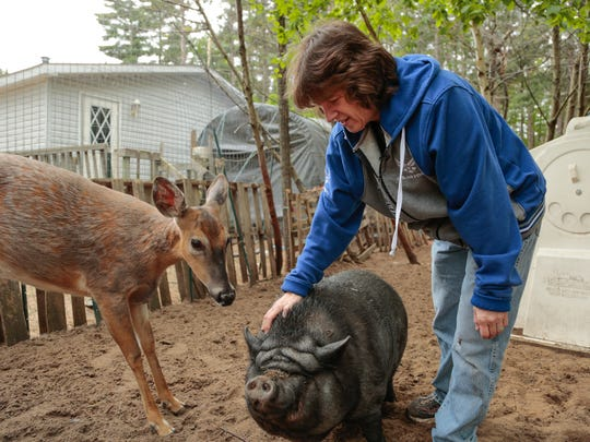 """Diane Morin, 57, pets Kisses, a potbelly pig, as a deer looks on at Pete's Petting Zoo in Baraga, Mich., located in the Upper Peninsula. Morin and her husband run the petting zoo/animal rescue alongside Morin Fireworks. """"We just wanted a little petting zoo, and all of the rescues up here closed down for non support. Nobody would support them. We took all of the ones that they couldn't find homes for. We took the ones that people didn't want because they're not perfect and then we turned it into a rescue sanctuary and we've been doing it ever since for eight years now,"""" Morin said."""