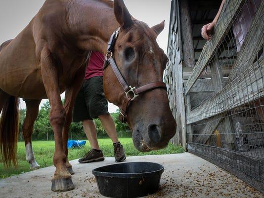 Horse Baxter 2 AP