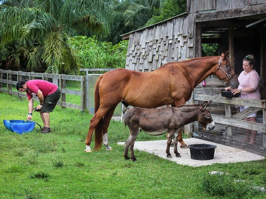 In this Thursday, Aug. 11, 2016 photo, Joe Forzano fills the water as his wife Sami Forzano feeds their one-eyed horse Baxter at the farm in Loxahatchee, Fla. The couple care for the horse after their dear friend and colleague, Pat Stephens, who owned the horse died from cancer in April, 2016.