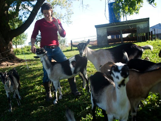 Katie Wiste stands amongst her goats that she raises to milk and make cheese with at her farm in Altura, MN.