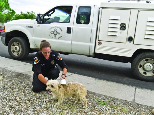 Las Cruces animal control officer Ann Vander Vliet checks for a microchip on a stray dog.