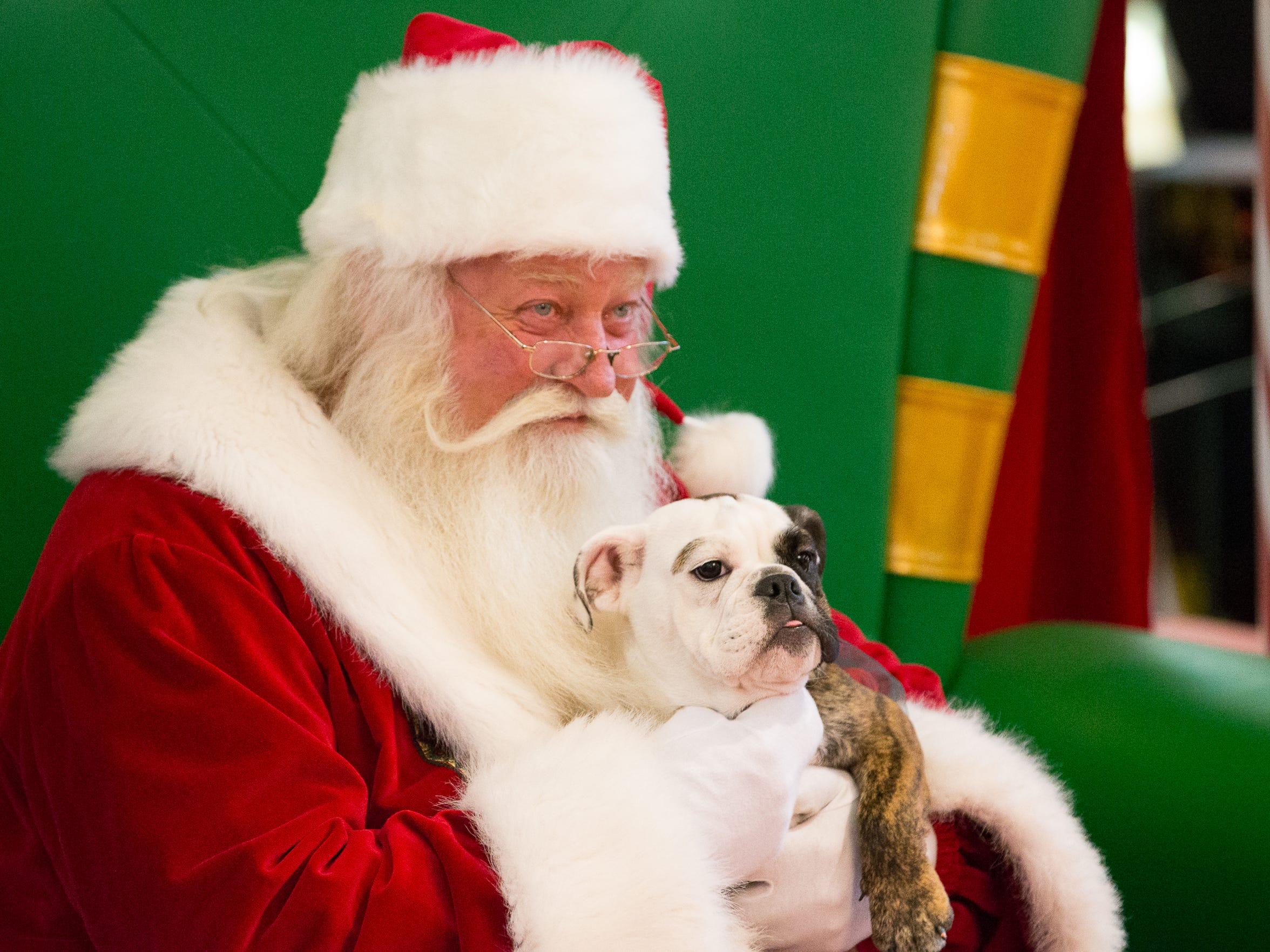 Lola as her photo taken with Santa during pet night