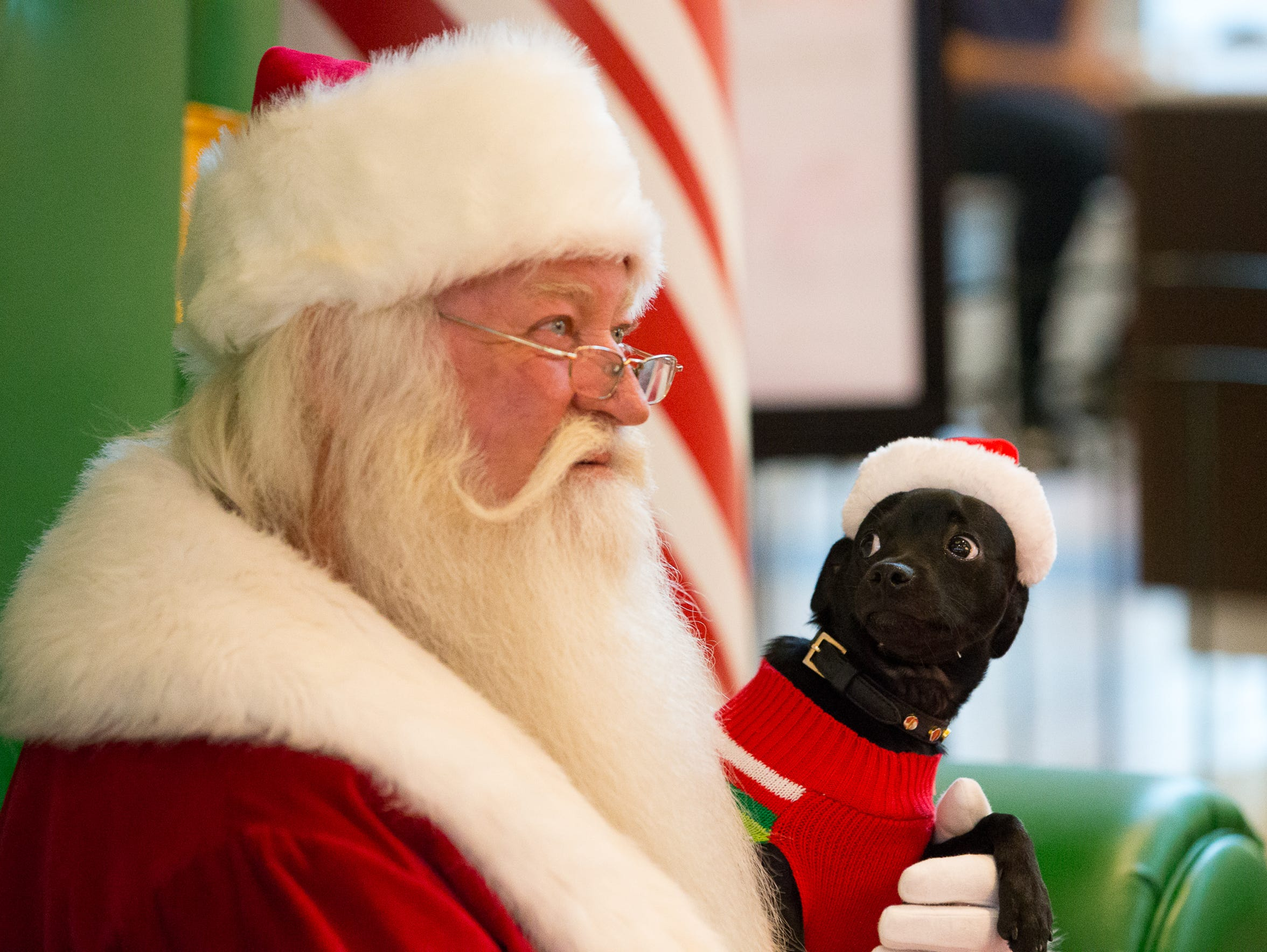 Gucci looks up at Santa as a photo is taken during