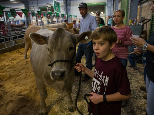 Ten-year-old Hayes Hermann waits to have his market steer weighed during the Nueces County Junior Livestock Show on Thursday, Jan. 19, 2017, at the Richard M. Borchard Regional Fairgrounds in Robstown.