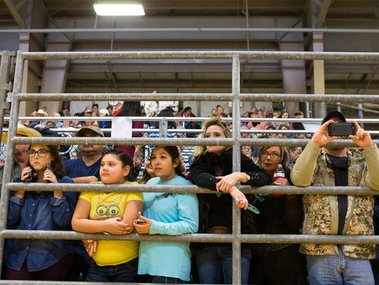 Spectators watch the market swine judging on the area