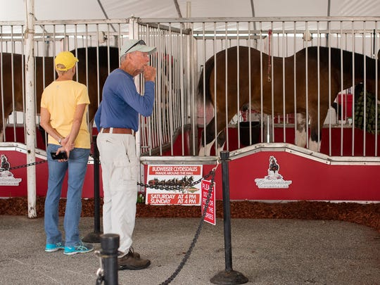 Spectators visit the Budweiser Clydesdales on display in the parking lot at La Palmera mall on Friday, Feb. 10, 2017.