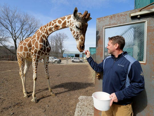 Jason Holloway of Metuchen, elephant supervisor, feeds a candy cane to Georgia, a 23-year-old giraffe, at Six Flags Great Adventure and Safari in Jackson, NJ Monday February 27, 2017.